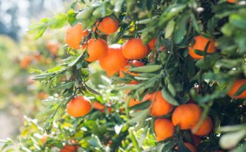 All the facts you need to know about India's horticulture production in 2020-21