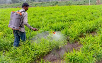 Best Crop Science to manufacture Trifloxystrobin fungicide in India