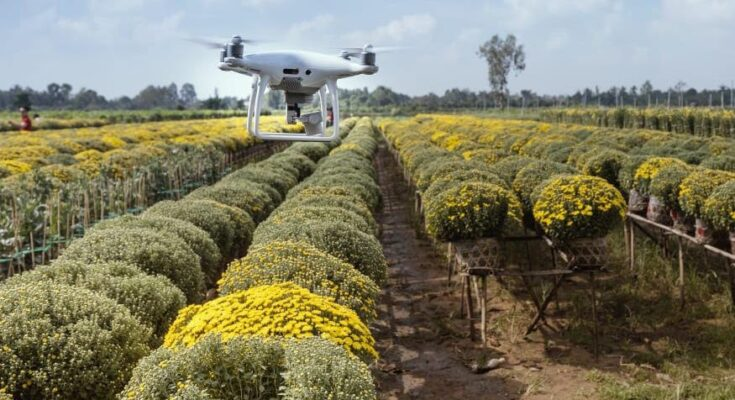 India needs widespread adoption of Artificial Intelligence to improve crop productivity