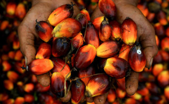 All things you need to know about National Mission on Edible Oils – Oil Palm