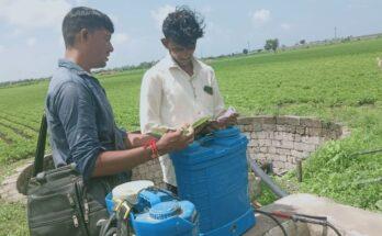 IIL deploys 600+ crop advisors under mega farmer awareness program