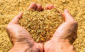 India produces record 308 million tonnes of foodgrains in FY21: 4th Advance Estimates