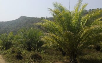 OPDPA welcomes Govt's move towards pushing oil palm cultivation