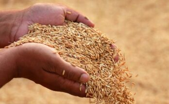 Agri surplus should be leveraged in a way that farmers get regular income: Chairman APEDA