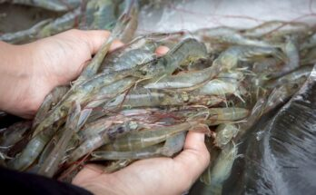 Aquaculture is key to meet increasing food demand: FAO