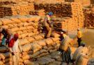 India's foodgrain production is estimated at 150.5 million tonnes in Kharif 2021