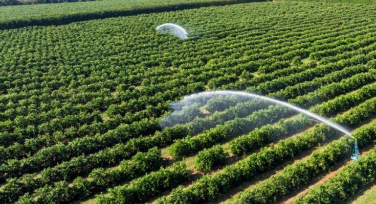 Samunnati, SatSure sign MoU to enable farm monitoring of loanee farmers to mitigate risk