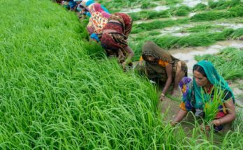 Skymet, GramCover launches Kharif Crop Outlook Report 2021-22