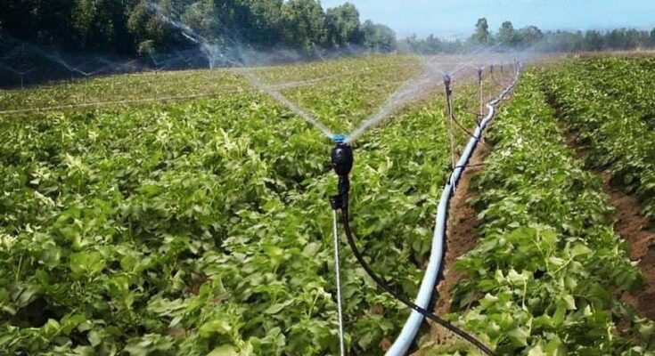 Agoro Carbon Alliance to facilitate sustainable agriculture programmes in India