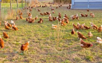 Proteon Pharma to focus on sustainable alternative to antibiotics in poultry industry